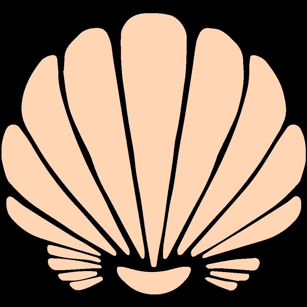 NLY seashells